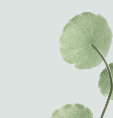 home_yoga_lotus1
